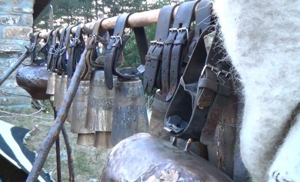 ΣΑΜΑΡΙΝΑ: Σε απόγνωση οι κτηνοτρόφοι απο τις επιθέσεις της αρκούδας στα κοπάδια τους (VIDEO)